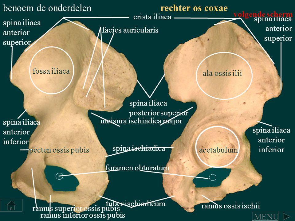 ramus ossis ischii ramus inferior ossis pubis ramus superior ossis pubis pecten ossis pubis tuber ischiadicum foramen obturatum spina ischiadica aceta