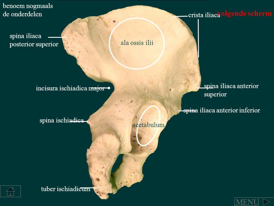acetabulum spina iliaca anterior superior spina iliaca anterior inferior spina iliaca posterior superior spina ischiadica incisura ischiadica major tu