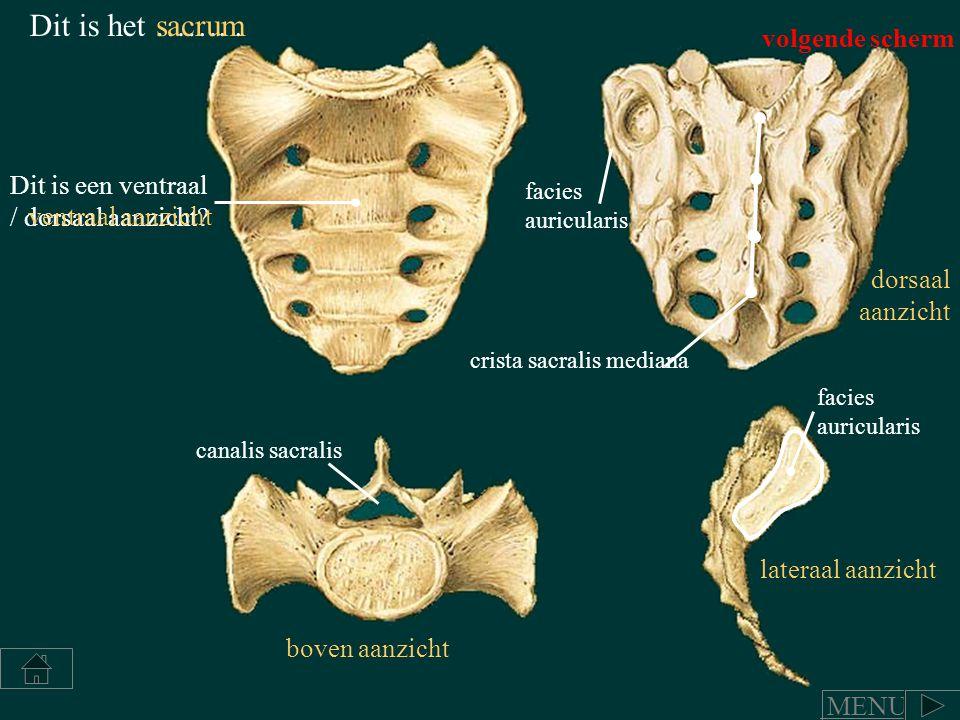 Dit is het ……..sacrum crista sacralis mediana canalis sacralis Dit is een ventraal / dorsaal aanzicht? ventraal aanzicht dorsaal aanzicht boven aanzic