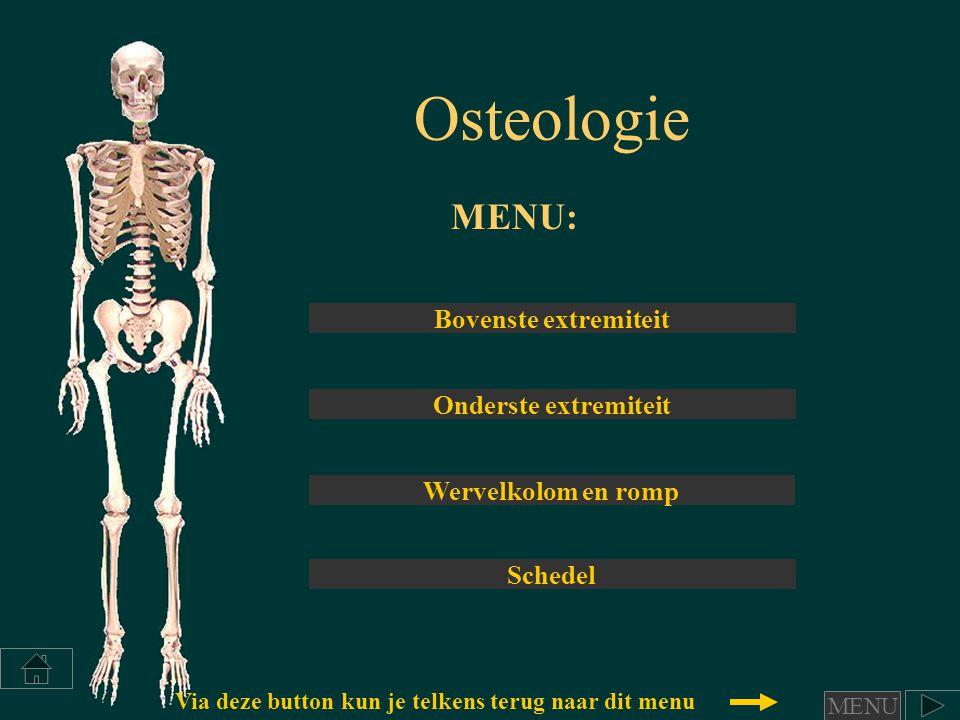 Osteologie MENU: Bovenste extremiteit Onderste extremiteit Wervelkolom en romp Schedel Via deze button kun je telkens terug naar dit menu MENU