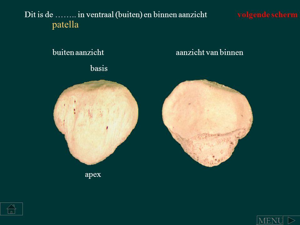 patella basis apex Dit is de …….. in ventraal (buiten) en binnen aanzicht buiten aanzicht aanzicht van binnen volgende scherm MENU