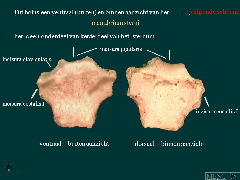 Dit bot is een ventraal (buiten) en binnen aanzicht van het …….., het is een onderdeel van het ……... incisura jugularis incisura clavicularis incisura