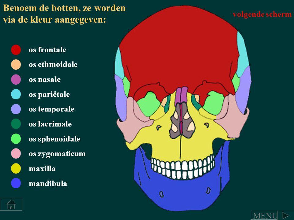Benoem de botten, ze worden via de kleur aangegeven: os frontale os pariëtale os temporale os lacrimale os sphenoidale os zygomaticum maxilla mandibul
