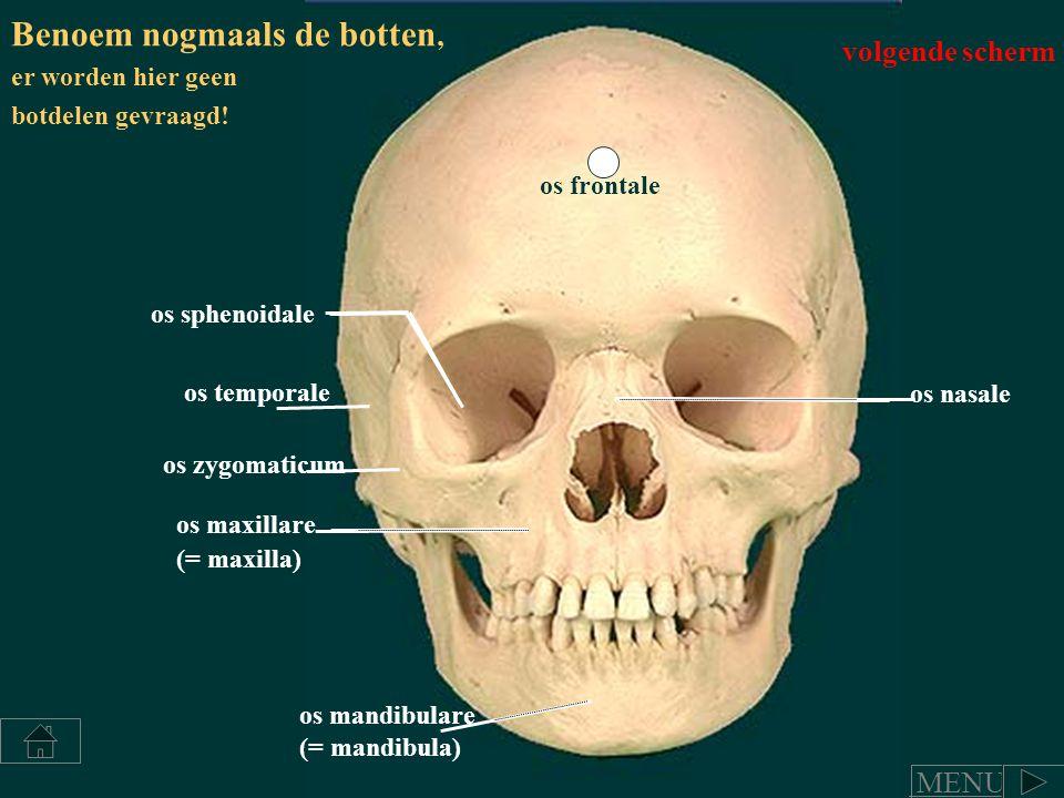 os frontale os temporale os mandibulare (= mandibula) os maxillare (= maxilla) os nasale os zygomaticum os sphenoidale Benoem nogmaals de botten, er w
