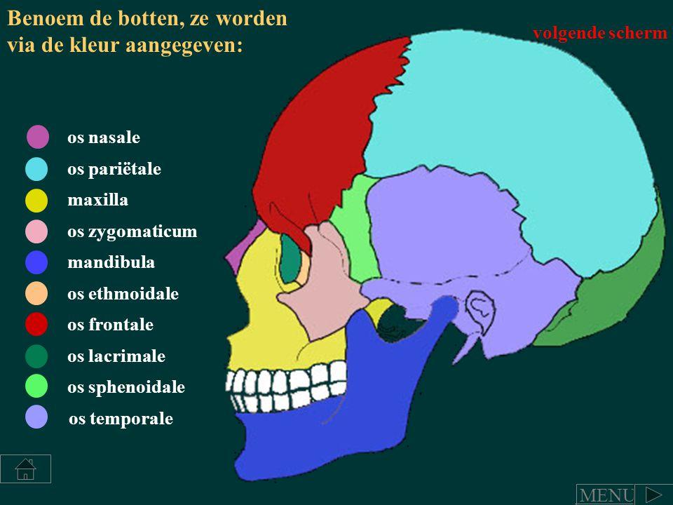 os frontale os pariëtale os temporale os ethmoidale os sphenoidale os zygomaticum maxilla mandibula os lacrimale os nasale Benoem de botten, ze worden