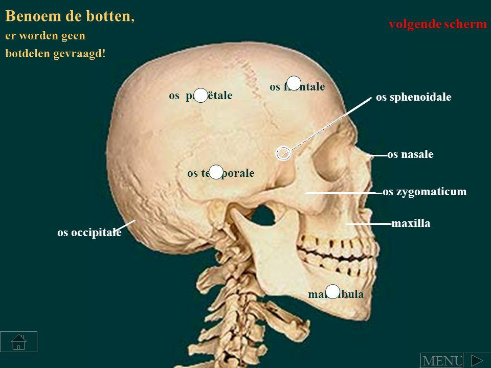 os frontale os temporale os pariëtale os occipitale os nasale mandibula maxilla os zygomaticum os sphenoidale Benoem de botten, er worden geen botdele