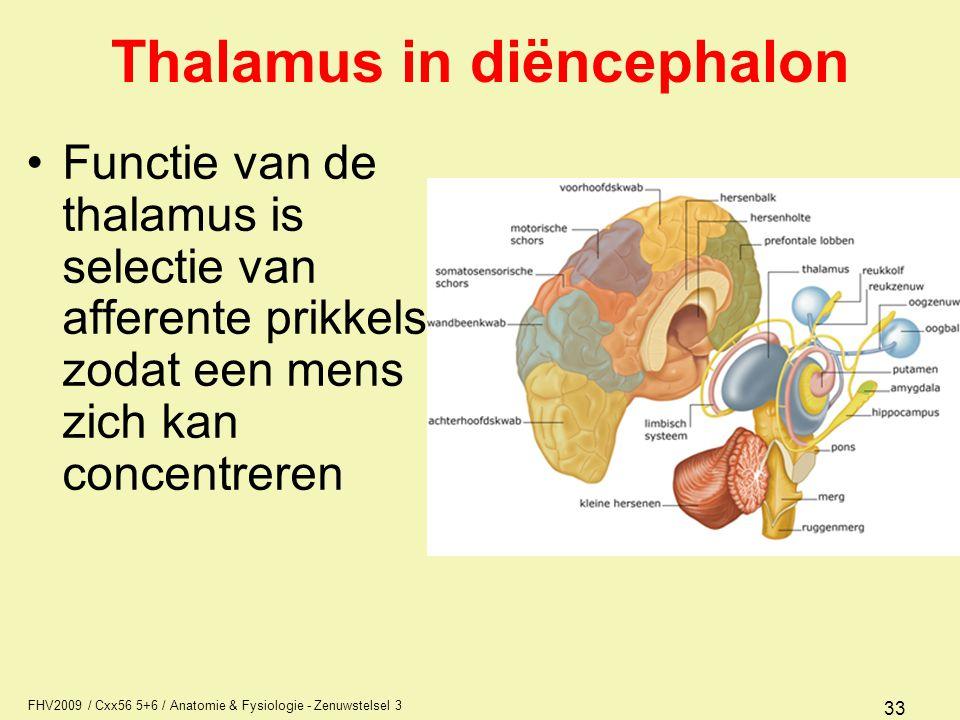 FHV2009 / Cxx56 5+6 / Anatomie & Fysiologie - Zenuwstelsel 3 33 Thalamus in diëncephalon Functie van de thalamus is selectie van afferente prikkels zo