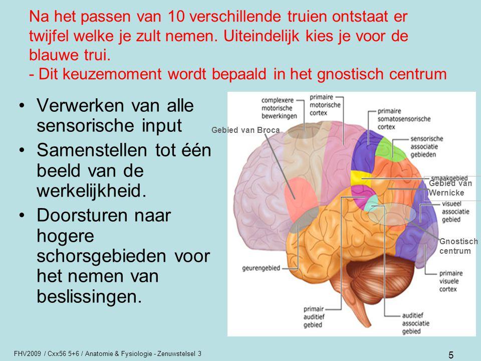 FHV2009 / Cxx56 5+6 / Anatomie & Fysiologie - Zenuwstelsel 3 26 Functie cerebellum Coördinatie (planning, uitvoering en controle) van willekeurige bewegingen.
