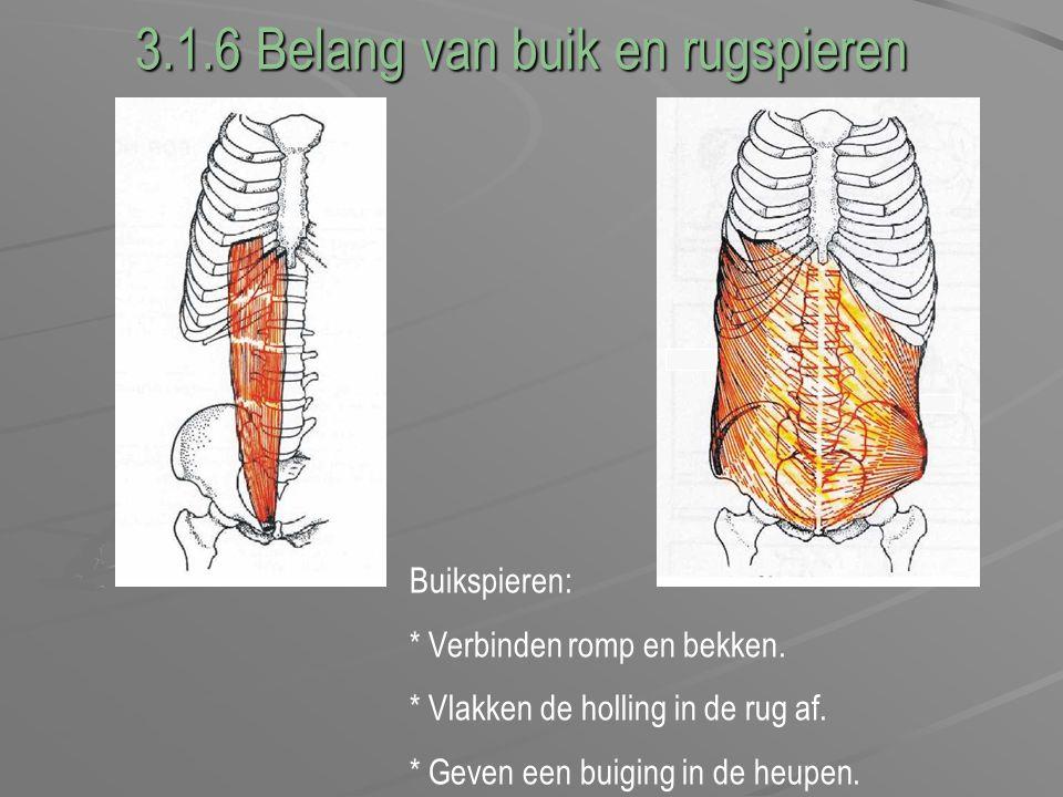 3.1.6 Belang van buik en rugspieren Buikspieren: * Verbinden romp en bekken. * Vlakken de holling in de rug af. * Geven een buiging in de heupen.