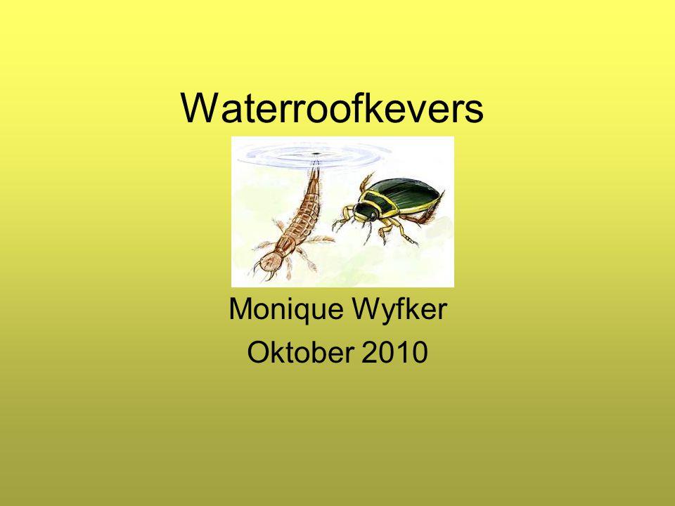 Waterroofkevers Monique Wyfker Oktober 2010
