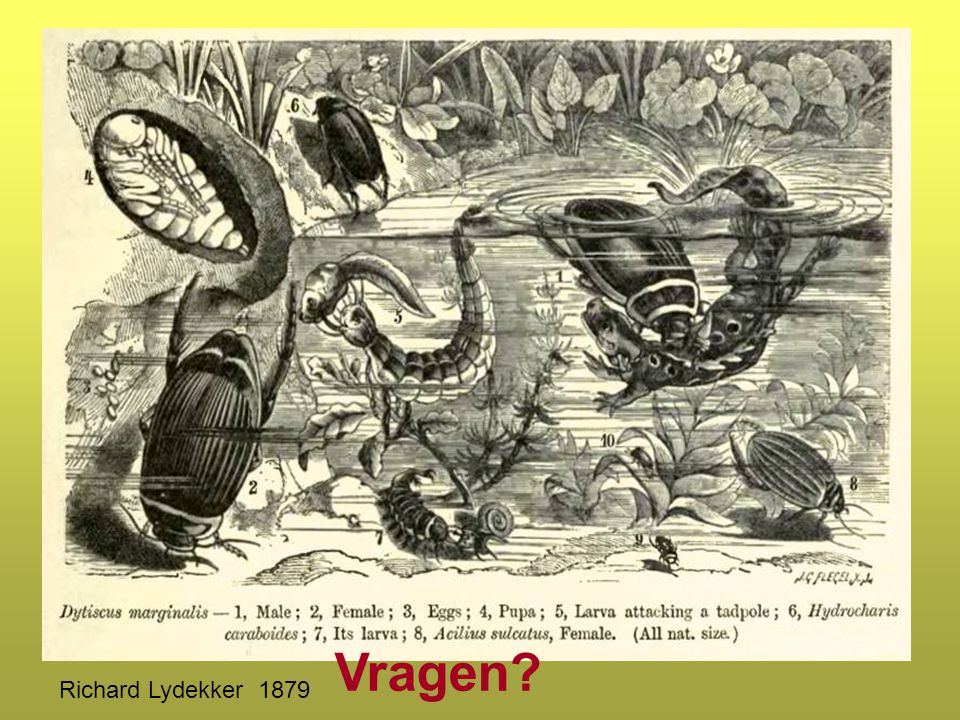Vragen? Richard Lydekker 1879
