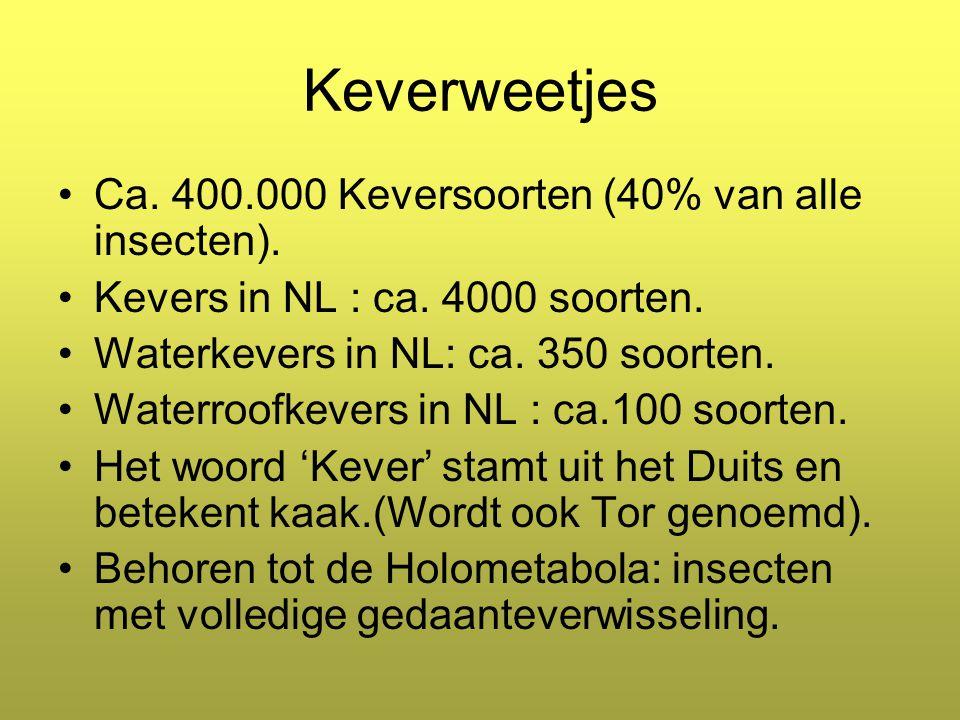Keverweetjes Ca.400.000 Keversoorten (40% van alle insecten).