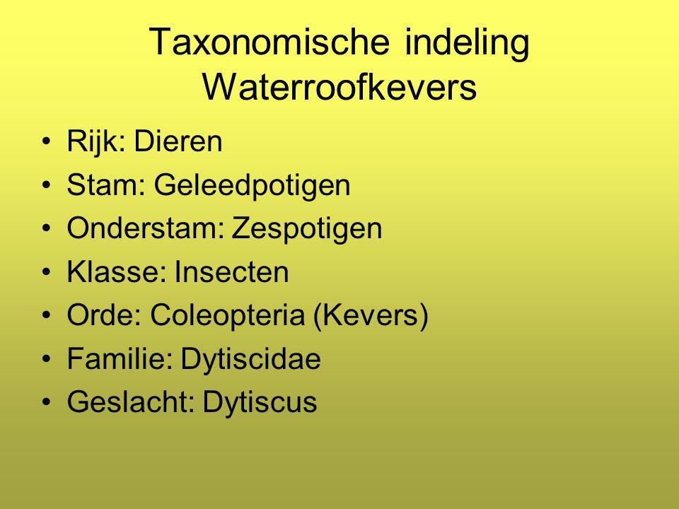 Taxonomische indeling Waterroofkevers Rijk: Dieren Stam: Geleedpotigen Onderstam: Zespotigen Klasse: Insecten Orde: Coleopteria (Kevers) Familie: Dytiscidae Geslacht: Dytiscus