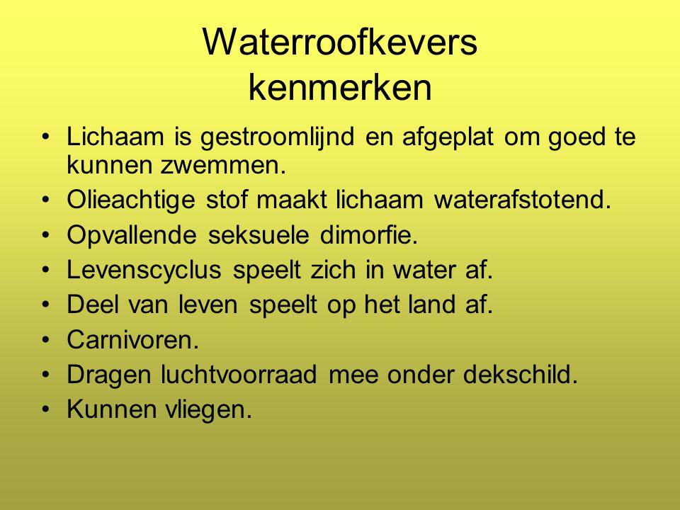 Waterroofkevers kenmerken Lichaam is gestroomlijnd en afgeplat om goed te kunnen zwemmen.
