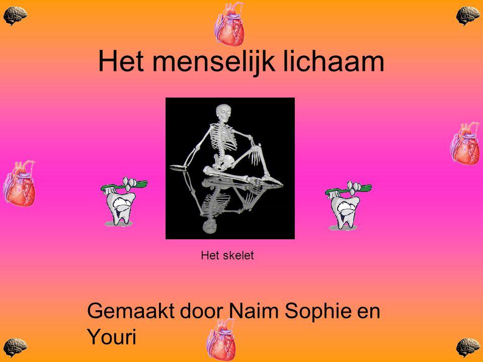 Het menselijk lichaam Gemaakt door Naim Sophie en Youri Het skelet