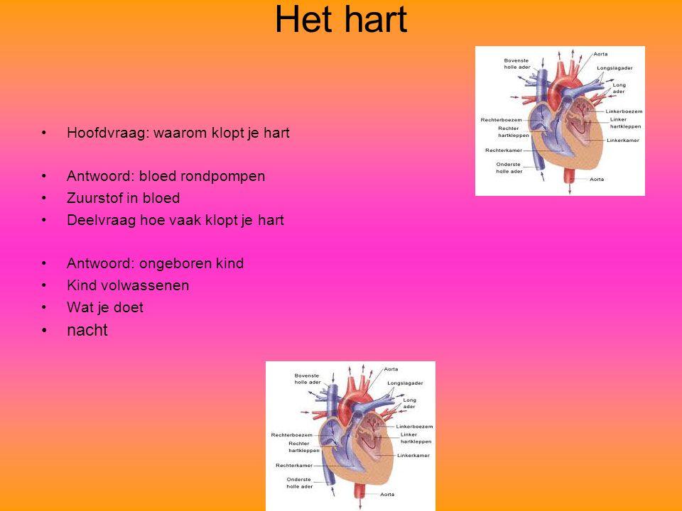 Het hart Hoofdvraag: waarom klopt je hart Antwoord: bloed rondpompen Zuurstof in bloed Deelvraag hoe vaak klopt je hart Antwoord: ongeboren kind Kind