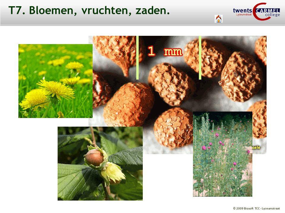 © 2009 Biosoft TCC - Lyceumstraat T7. Bloemen, vruchten, zaden.