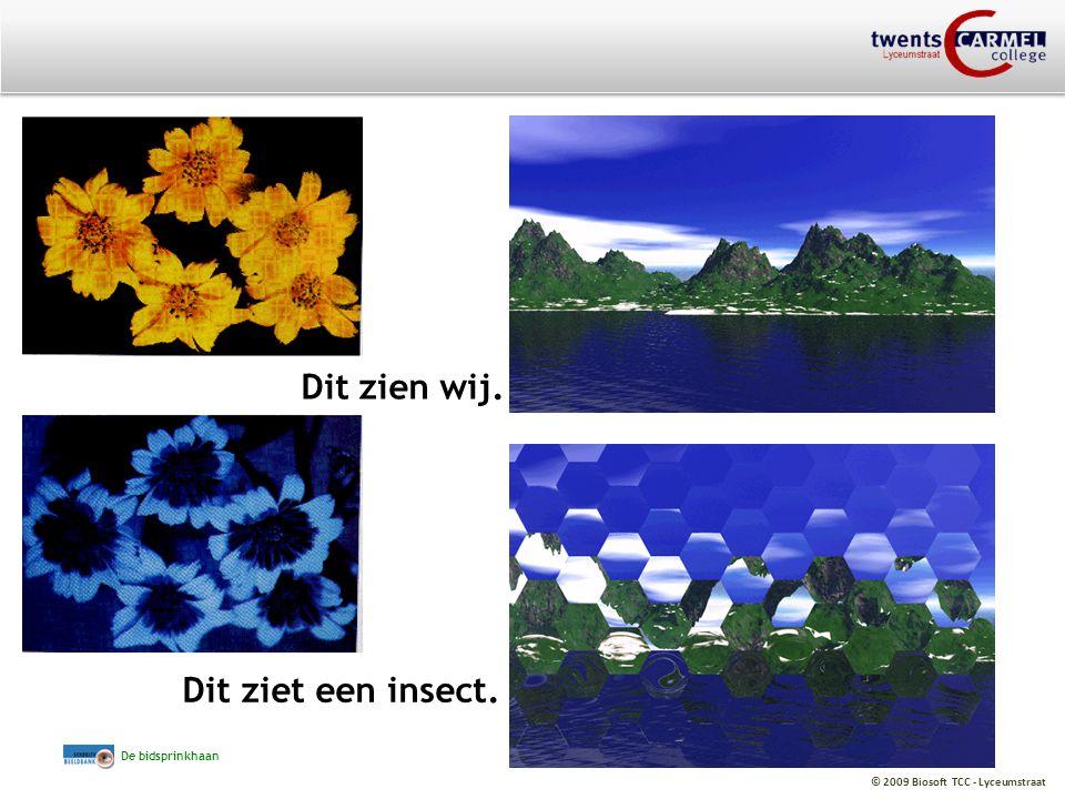 © 2009 Biosoft TCC - Lyceumstraat Dit zien wij. Dit ziet een insect. De bidsprinkhaan