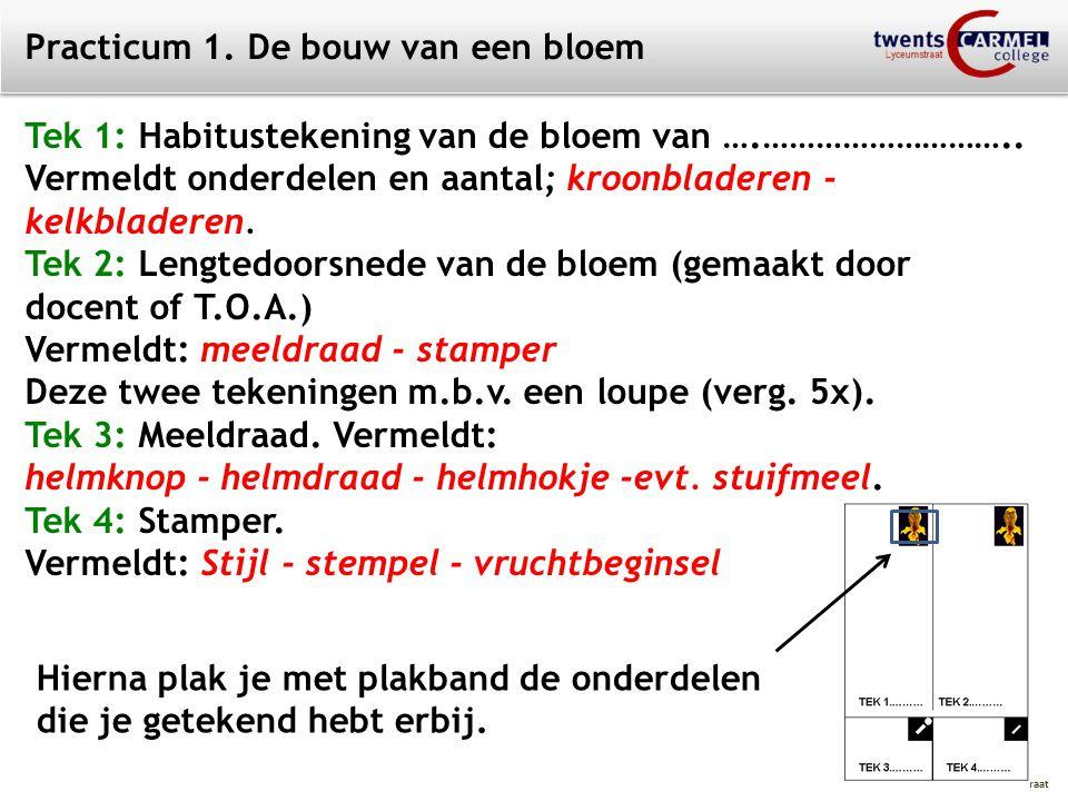 © 2009 Biosoft TCC - Lyceumstraat Practicum 1. De bouw van een bloem Tek 1: Habitustekening van de bloem van ….……………………….. Vermeldt onderdelen en aant