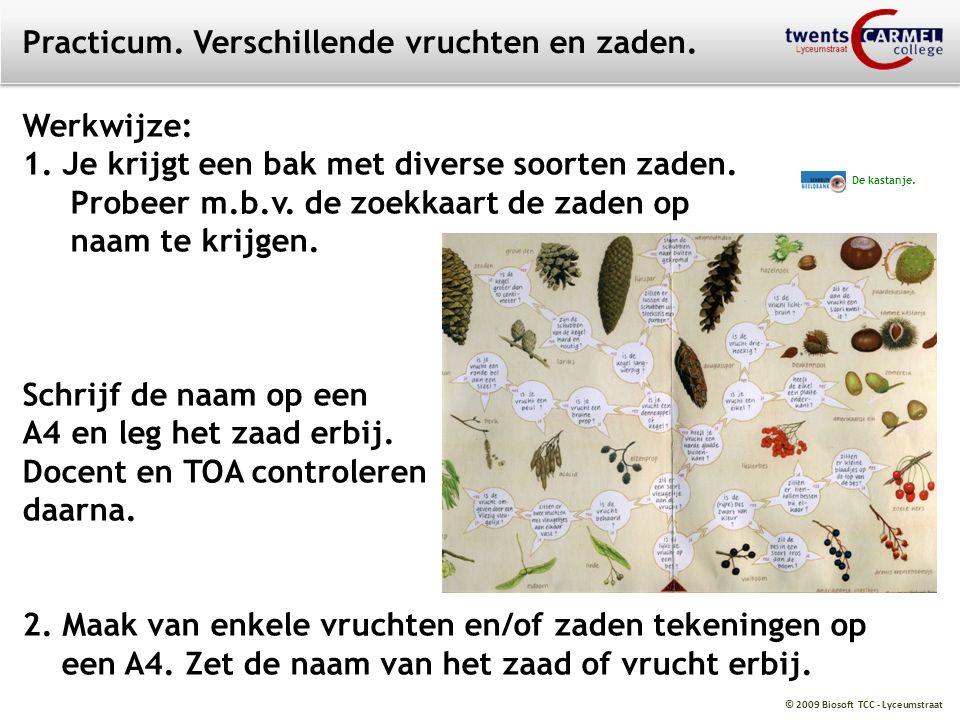 © 2009 Biosoft TCC - Lyceumstraat Practicum. Verschillende vruchten en zaden. De kastanje. Werkwijze: 1. Je krijgt een bak met diverse soorten zaden.