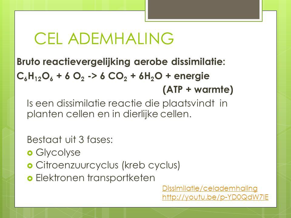 CEL ADEMHALING Is een dissimilatie reactie die plaatsvindt in planten cellen en in dierlijke cellen. Bestaat uit 3 fases:  Glycolyse  Citroenzuurcyc