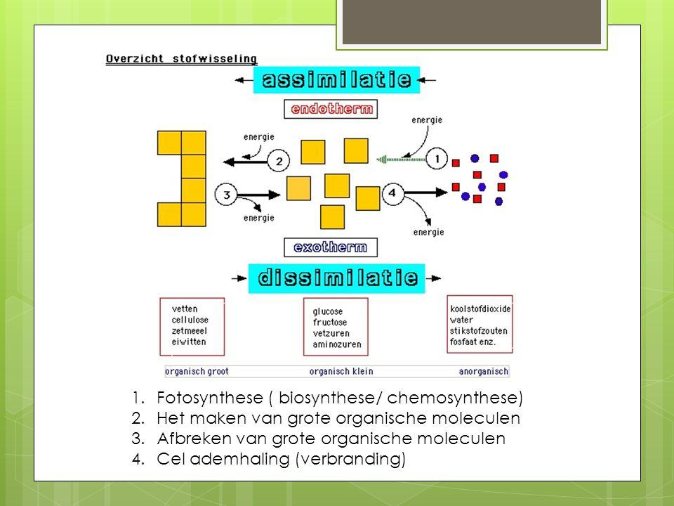 1.Fotosynthese ( biosynthese/ chemosynthese) 2.Het maken van grote organische moleculen 3.Afbreken van grote organische moleculen 4.Cel ademhaling (ve
