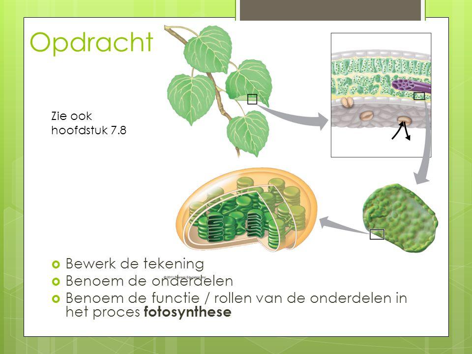 Opdracht  Bewerk de tekening  Benoem de onderdelen  Benoem de functie / rollen van de onderdelen in het proces fotosynthese Zie ook hoofdstuk 7.8