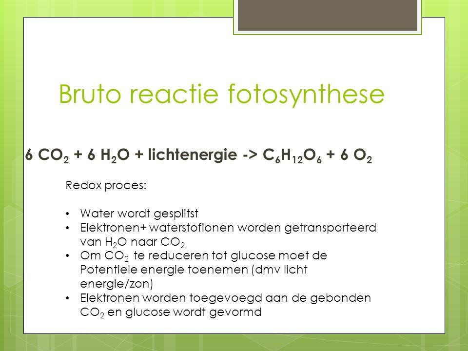 Bruto reactie fotosynthese 6 CO 2 + 6 H 2 O + lichtenergie -> C 6 H 12 O 6 + 6 O 2 Redox proces: Water wordt gesplitst Elektronen+ waterstofionen word