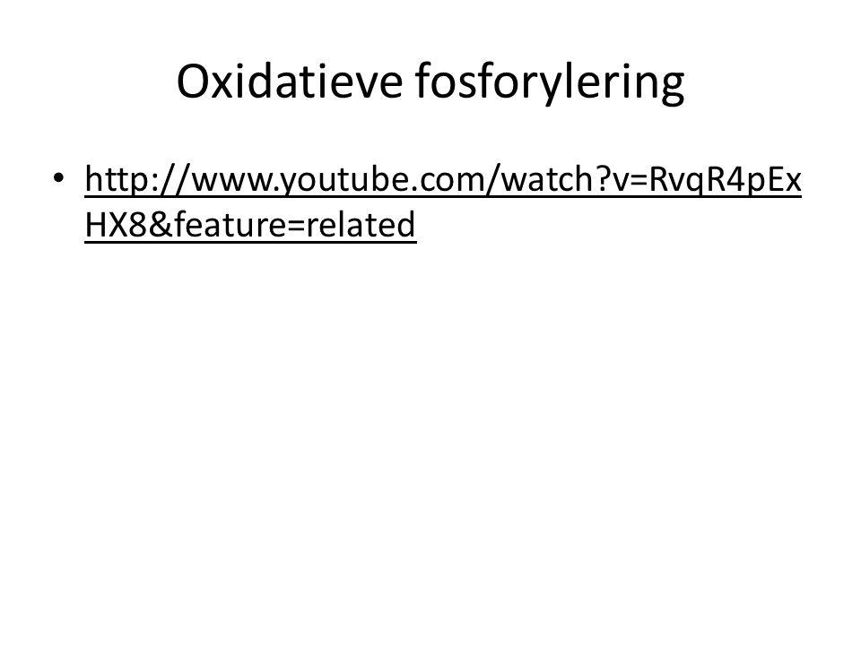 Oxidatieve fosforylering http://www.youtube.com/watch?v=RvqR4pEx HX8&feature=related