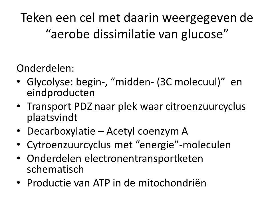 """Teken een cel met daarin weergegeven de """"aerobe dissimilatie van glucose"""" Onderdelen: Glycolyse: begin-, """"midden- (3C molecuul)"""" en eindproducten Tran"""