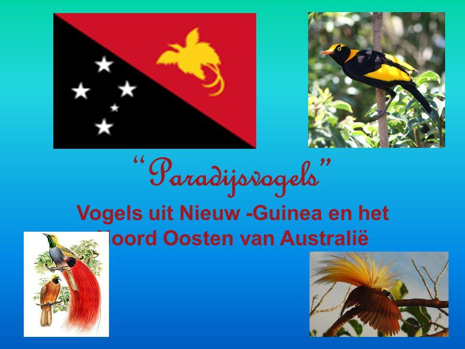 """"""" Paradijsvogels"""" Vogels uit Nieuw -Guinea en het Noord Oosten van Australië"""