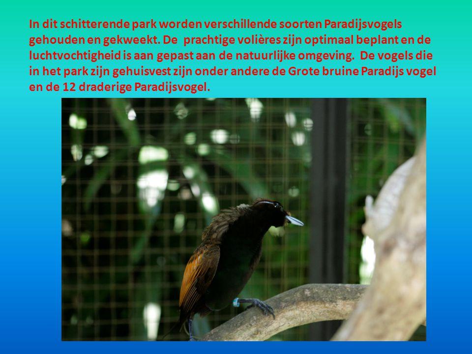 In dit schitterende park worden verschillende soorten Paradijsvogels gehouden en gekweekt. De prachtige volières zijn optimaal beplant en de luchtvoch