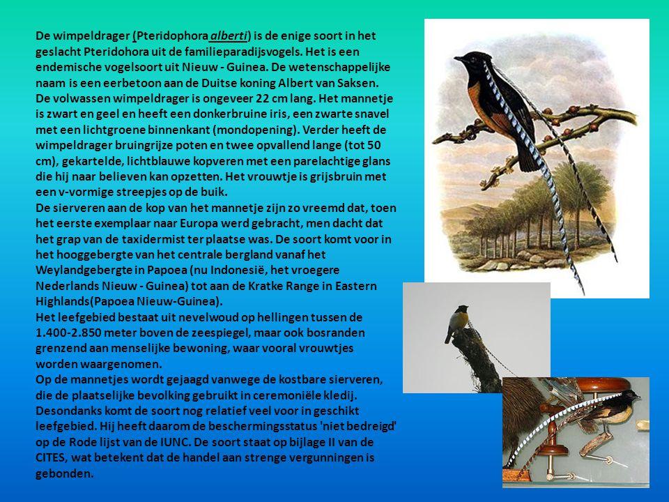 De wimpeldrager (Pteridophora alberti) is de enige soort in het geslacht Pteridohora uit de familieparadijsvogels. Het is een endemische vogelsoort ui