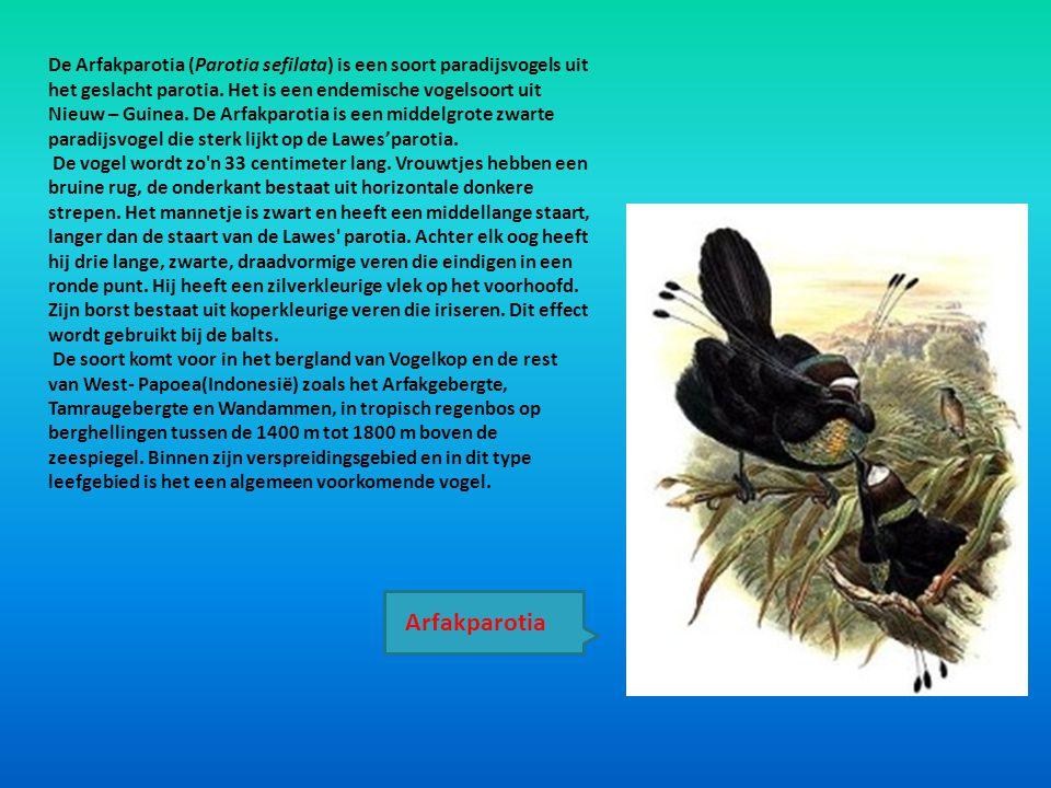 De Arfakparotia (Parotia sefilata) is een soort paradijsvogels uit het geslacht parotia. Het is een endemische vogelsoort uit Nieuw – Guinea. De Arfak