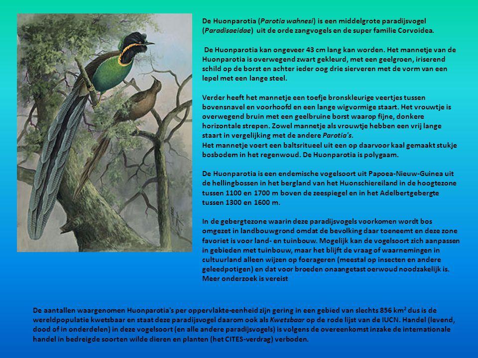 De Huonparotia (Parotia wahnesi) is een middelgrote paradijsvogel (Paradisaeidae) uit de orde zangvogels en de super familie Corvoidea. De Huonparotia
