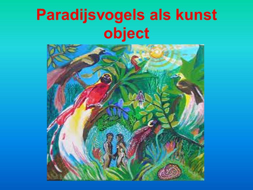 De paradijsvogel behoort zonder meer tot de mooiste vogels ter wereld.