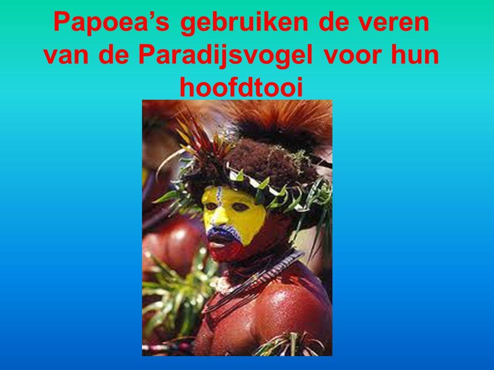 Papoea's gebruiken de veren van de Paradijsvogel voor hun hoofdtooi