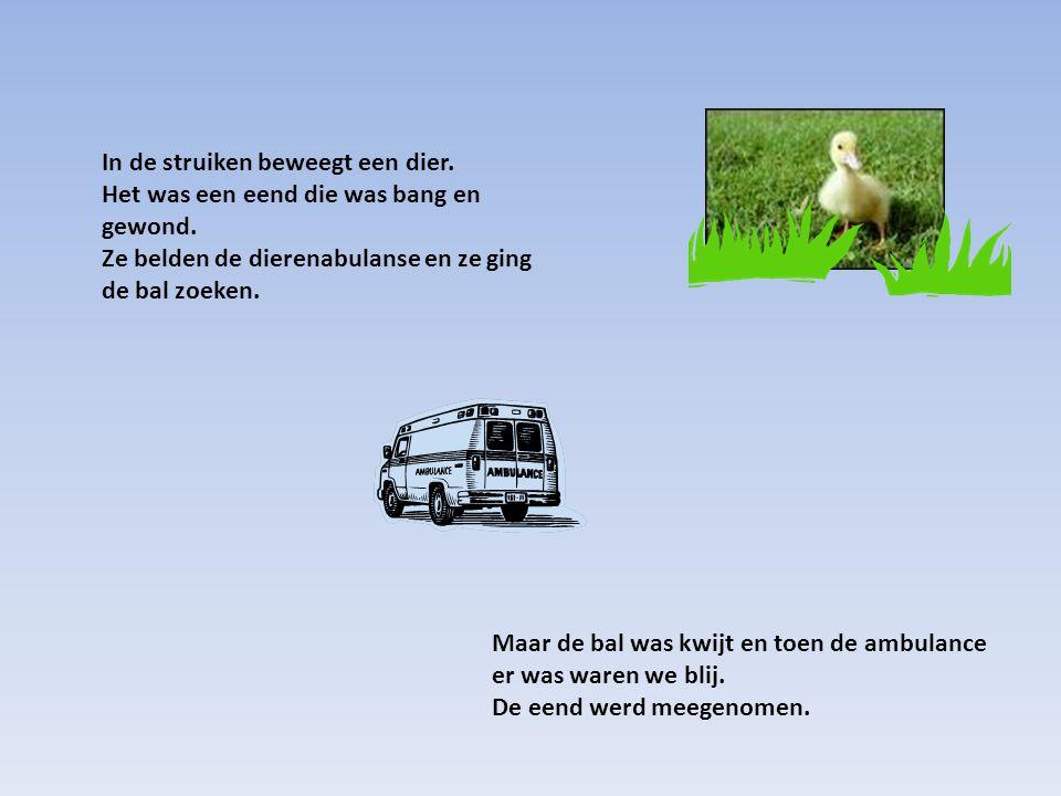 Maar de bal was kwijt en toen de ambulance er was waren we blij. De eend werd meegenomen. In de struiken beweegt een dier. Het was een eend die was ba