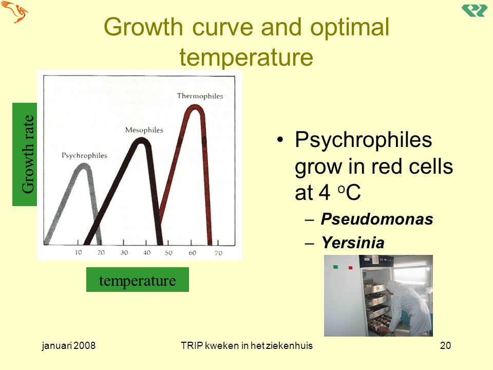 januari 2008TRIP kweken in het ziekenhuis20 Growth curve and optimal temperature Psychrophiles grow in red cells at 4 o C –Pseudomonas –Yersinia Growth rate temperature