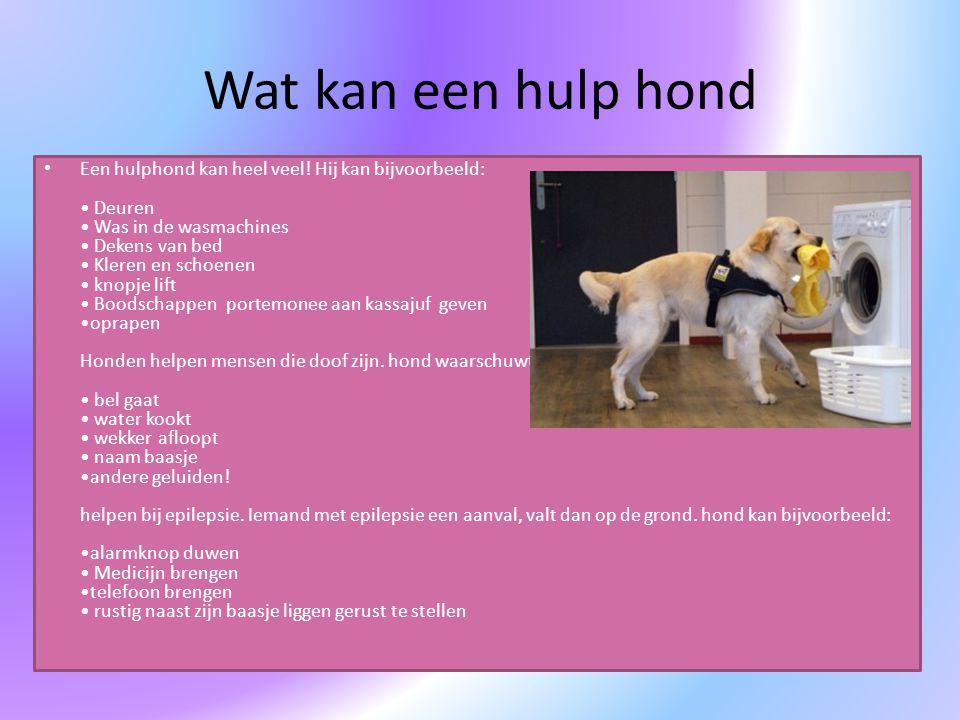 Wat kan een hulp hond Een hulphond kan heel veel! Hij kan bijvoorbeeld: Deuren Was in de wasmachines Dekens van bed Kleren en schoenen knopje lift Boo