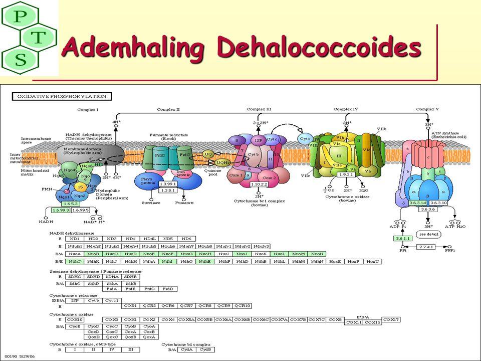 Ademhaling Dehalococcoides