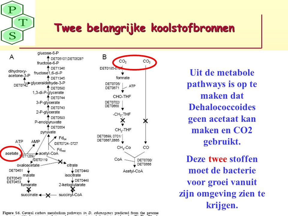Twee belangrijke koolstofbronnen Uit de metabole pathways is op te maken dat Dehalococcoides geen acetaat kan maken en CO2 gebruikt. Deze twee stoffen