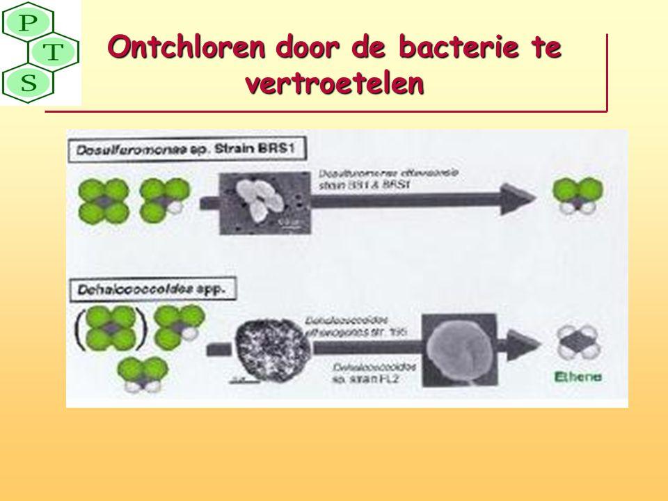 Ontchloren door de bacterie te vertroetelen