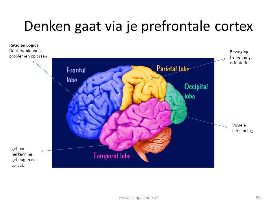 Denken gaat via je prefrontale cortex Ratio en Logica Denken, plannen, problemen oplossen gehoor herkenning, geheugen en spraak Beweging, herkenning,
