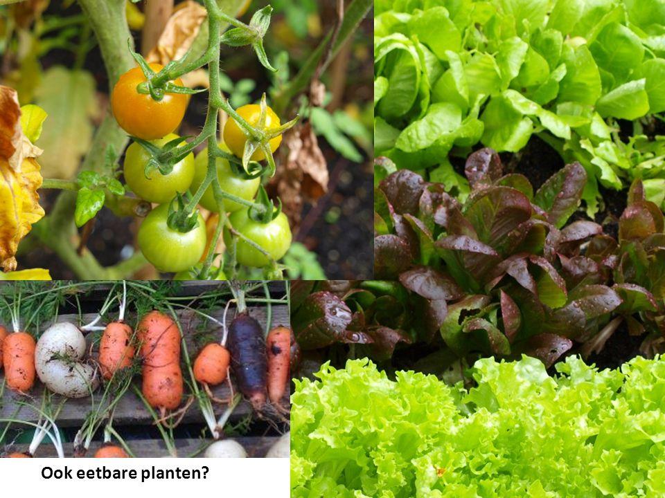 Ook eetbare planten?