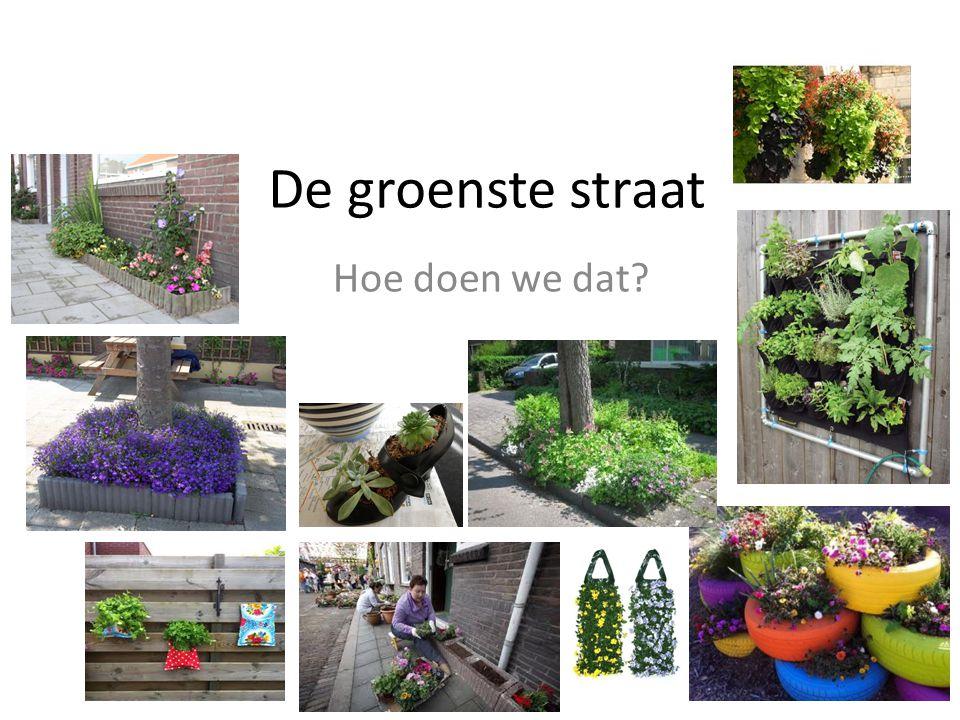 De groenste straat Hoe doen we dat?