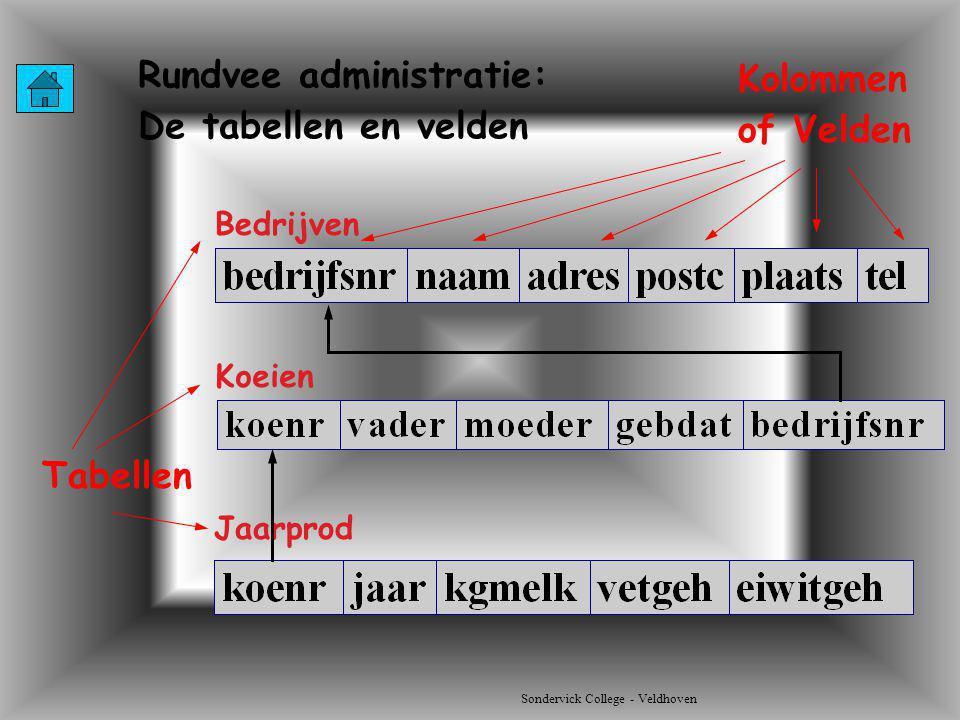 Sondervick College - Veldhoven Bedrijven Rundvee administratie: De tabellen en velden Koeien Jaarprod Tabellen Kolommen of Velden