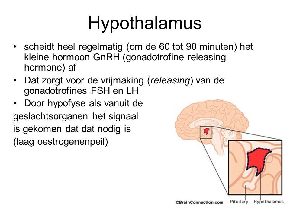 Hypothalamus scheidt heel regelmatig (om de 60 tot 90 minuten) het kleine hormoon GnRH (gonadotrofine releasing hormone) af Dat zorgt voor de vrijmaki
