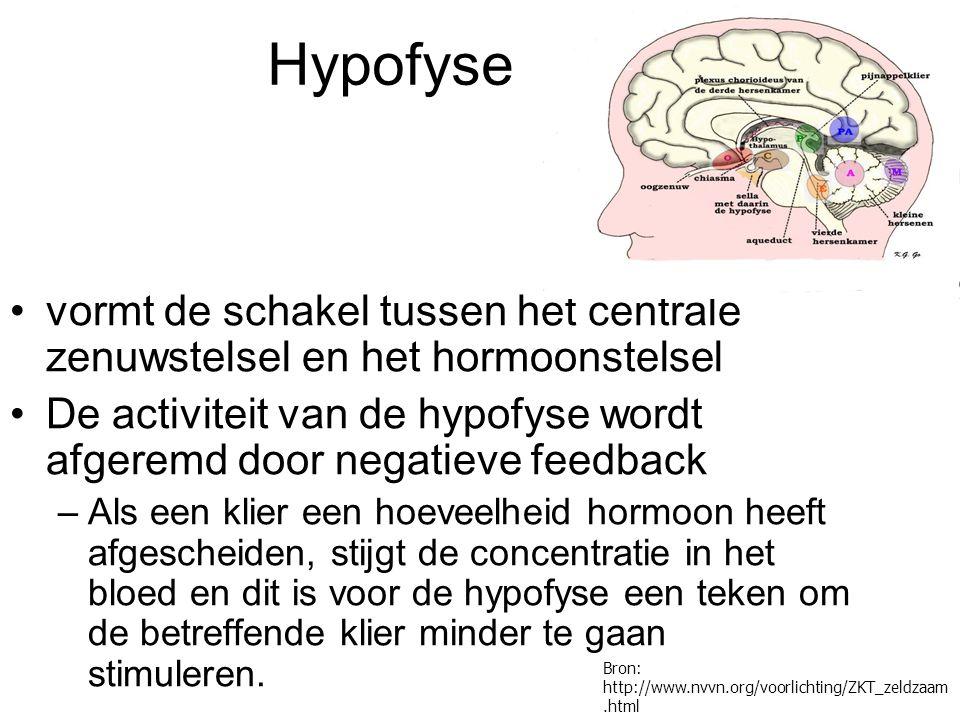 Hypofyse vormt de schakel tussen het centrale zenuwstelsel en het hormoonstelsel De activiteit van de hypofyse wordt afgeremd door negatieve feedback