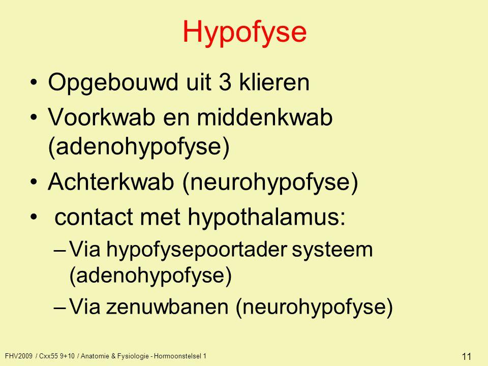 FHV2009 / Cxx55 9+10 / Anatomie & Fysiologie - Hormoonstelsel 1 11 Hypofyse Opgebouwd uit 3 klieren Voorkwab en middenkwab (adenohypofyse) Achterkwab